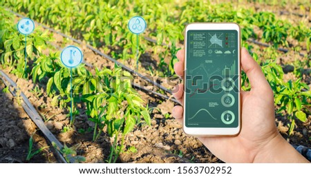 Farmer hold a smartphone on a background of a pepper plantation. Agricultural startup. Automation and crop quality improvement. High technology, innovation. Scientific research. #1563702952