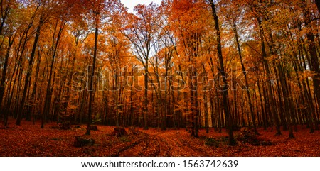 Autumn birch leaves. Natural background. #1563742639