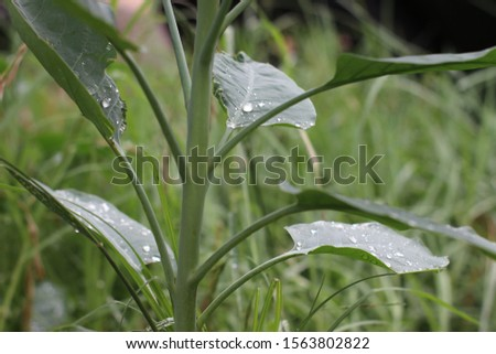 leaf with raindrops  #1563802822