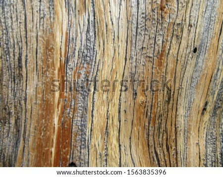 Exposed wood from tree in Estes Park, Colorado #1563835396