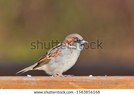 an english finch on a railing #1563856168
