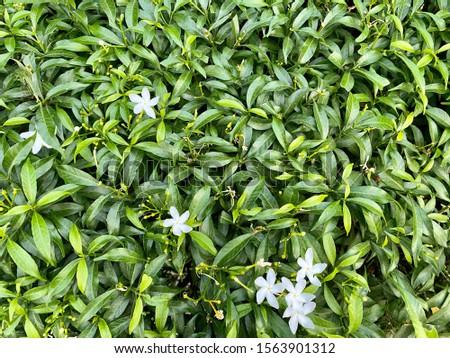 Fresh Green leaf and little white flower. #1563901312