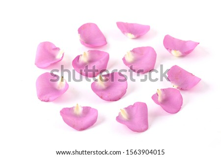Separate the rose petals. Fresh rose petals. Collection of petals    #1563904015