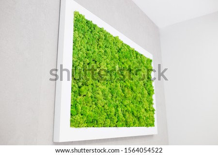 Green moss on the wall in the form of a picture. Beautiful white frame for a picture. Ecology.