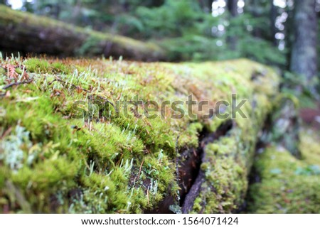 Mossy branch near Alta Lake, Whistler #1564071424