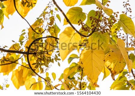 Tree Leaves (Dry Leaves, Green Leaves, Spilled Leaves) #1564104430