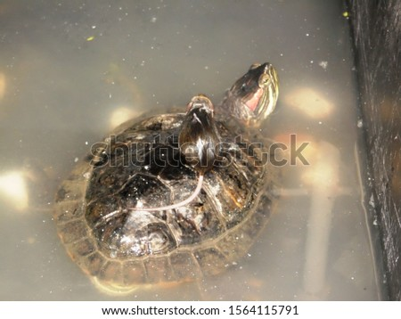 the mouse saved the turtle from the water #1564115791