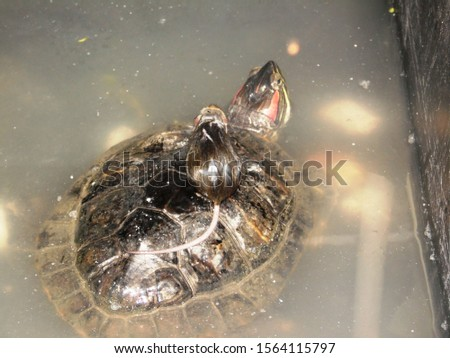 the mouse saved the turtle from the water #1564115797