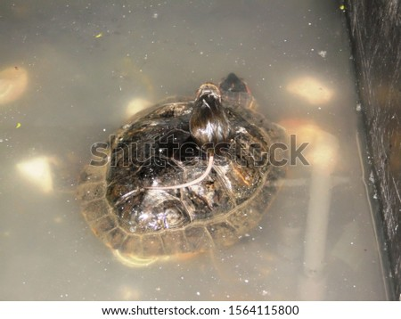 the mouse saved the turtle from the water #1564115800