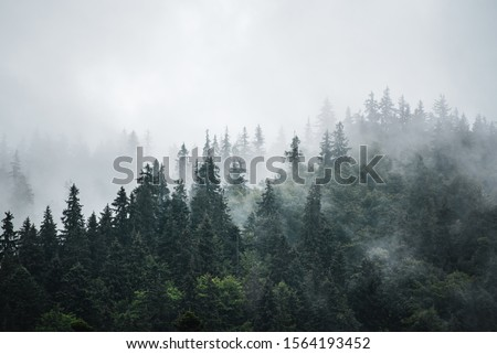 Misty foggy mountain landscape with fir forest and copyspace in vintage retro hipster style #1564193452
