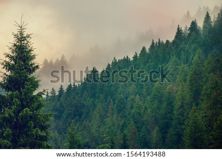 Misty foggy mountain landscape with fir forest and copyspace in vintage retro hipster style #1564193488