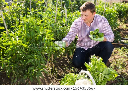 Positive man gardener during harvesting of  peppers and other vegetables in garden #1564353667
