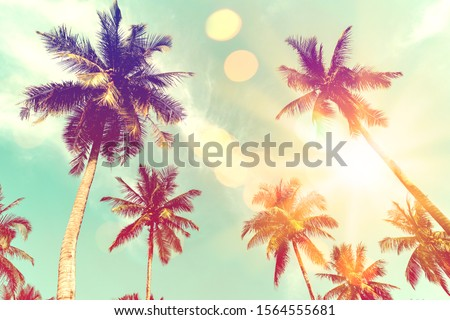 Tropical palm tree with colorful bokeh sun light on sunset sky cloud abstract background.Summer vacation and nature travel adventure concept.  Vintage tone filter effect color style. #1564555681