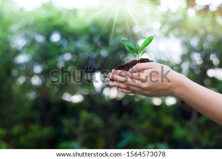 The hand that is planting trees to grow Help the world, environmental problems, protect nature The concept of world love