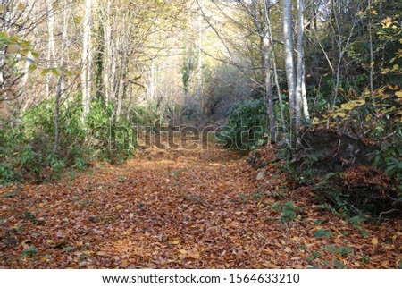 autumn picture of fallen leaves on a road among trees, vintage color