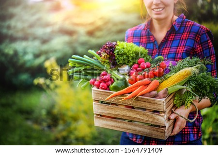 Farmer woman holding wooden box full of fresh raw vegetables. Basket with vegetable (cabbage, carrots, cucumbers, radish, corn, garlic and peppers) in the hands.  #1564791409
