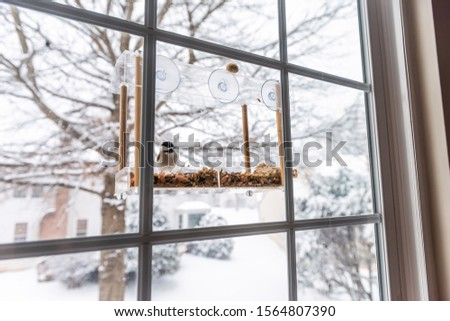 Wide angle view of chickadee bird sitting perching on plastic glass window feeder perch snowing winter day eating sunflower seeds in Virginia #1564807390