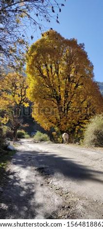 Peaceful tree with Peaceful colour #1564818862