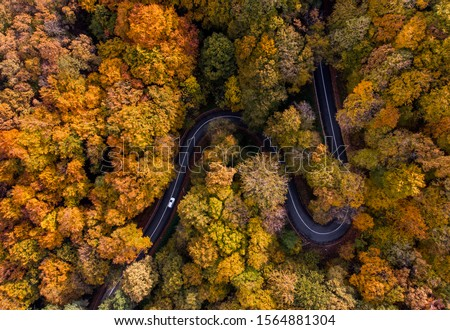Aerial view of curvy road in beautiful autumn forest. Top view of roadway with autumn colors. Road on Fruska gora mountain in Serbia,Vojvodina #1564881304