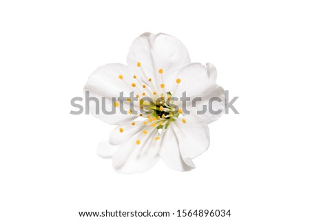 Spring flower apple blossoms bloomed isolated on white. Ivory blossom flower. Image contains clipping path.