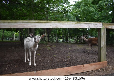 Picture of two deers at a deer park