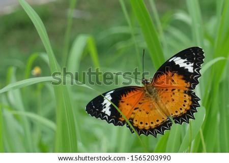 A butterfly in the garden  #1565203990