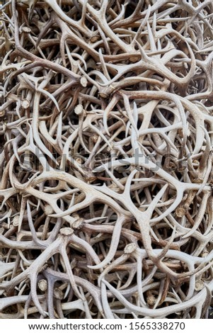 Pile of antlers, surreal conceptual background.