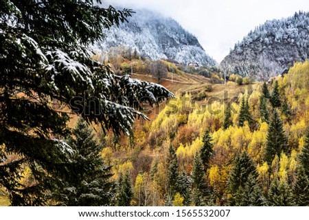 Autumn alpine landscape, alpine village with spectacular gardens and high snowy mountains in background near Bran, Magura, Transylvania, Romania. #1565532007