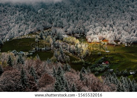Autumn alpine landscape, alpine village with spectacular gardens and high snowy mountains in background near Bran, Magura, Transylvania, Romania. #1565532016