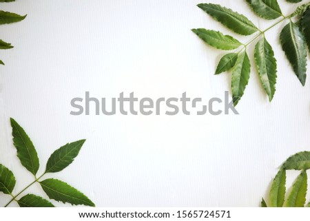 Green leaves isolated on white background,Copy space  #1565724571