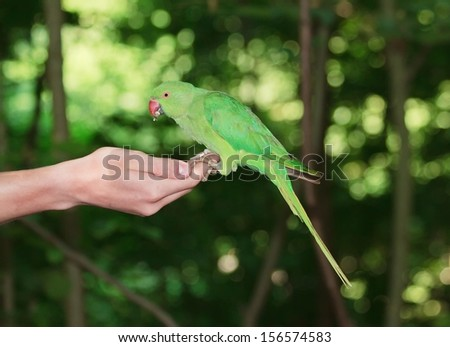 Collared parakeet put on a hand, eating seeds (France)  #156574583