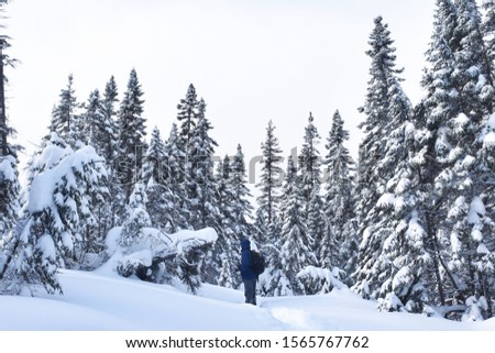Winter in the Mountains (with hiker among evergreens and fresh powdery snow), Quebec, Canada #1565767762