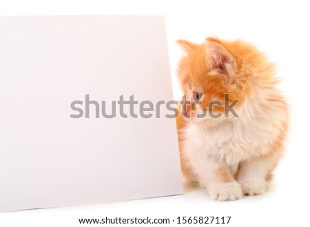 Kitten with blank. Kitten with blank on white background.  #1565827117