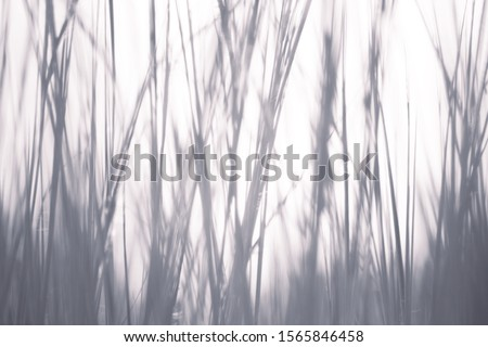 abstract shadow of grass on white background