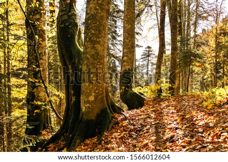Sunny autumn picturesque natural park landscape with sunlit trees. Fall trees with colorful leaves background. #1566012604