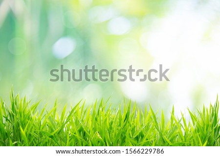 Spring or summer and grass field with sunny background #1566229786