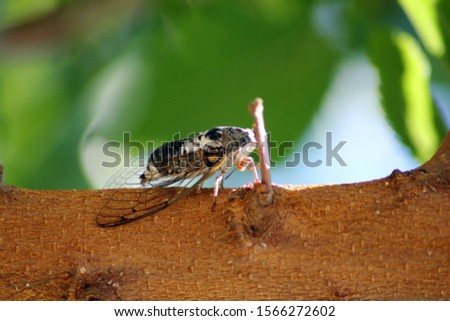 picture of cicada on tree in daytime