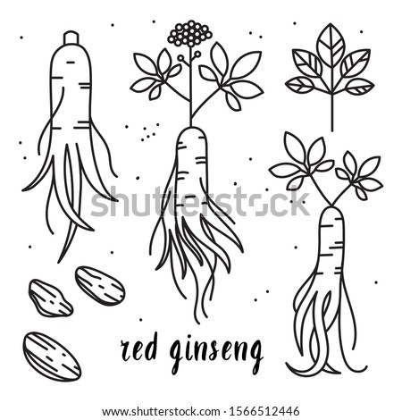 Vector outline illustration set of red or panax ginseng root isolated on a white background. Ginseng drawing for print, icon, logo, emblem, label and other decoration in. #1566512446
