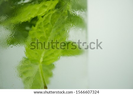 The close up of fresh mint infused water in the dewy glass #1566607324