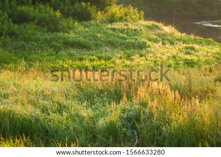 Summer landscape Trees lit by the setting sun, grass grown in a meadow illuminated by the sun #1566633280