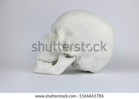 Gypsum human skull at white background. Forensic science and anatomy concept. #1566661786