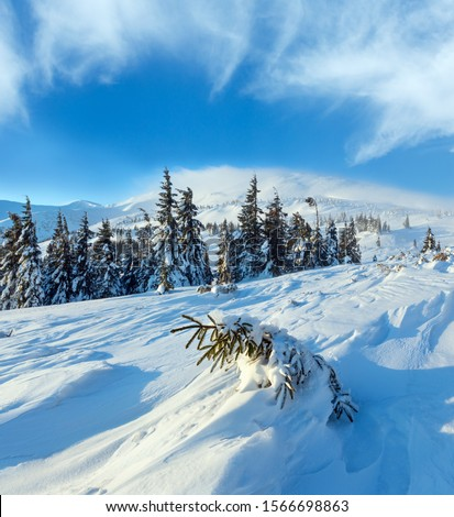 Small fir is inclined snow on slope in front. Morning winter mountain landscape with snowy trees, Carpathian. #1566698863