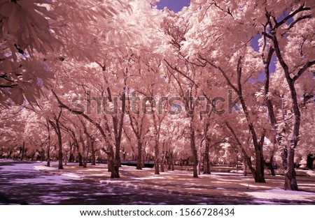 Infrared photo of view point in Central of Thailand.IR filter photo.