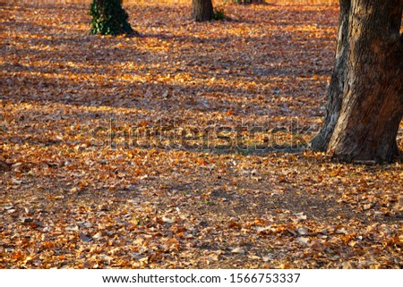 Beautiful autumn park. Ground is covered with fallen yellow leaves. Beautiful fall landscape. #1566753337