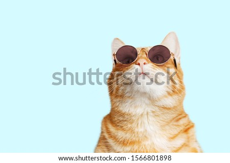 Closeup portrait of funny ginger cat wearing sunglasses and looking up isolated on light cyan. Copyspace. #1566801898