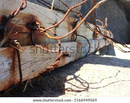 Driftwood found at the beach #1566949069