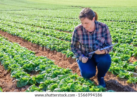 young technical woman working in a field of lettuces with a folder #1566994186