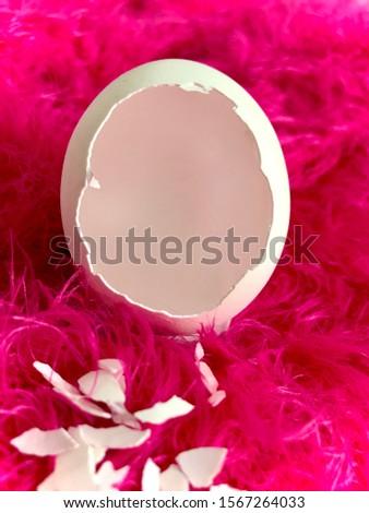 Baby Egg hatching photoshoot backdrop