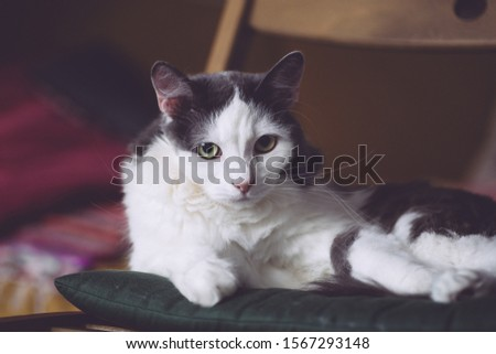 A sad cat sits on a chair and looks into the eyes.
