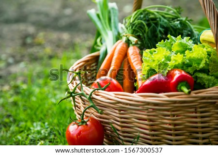 Fresh organic vegetables basket , local food , freshly harvested from garden #1567300537